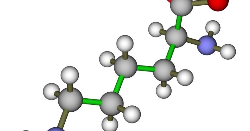 Aminosyren lysin er viktig ved trening, og finnes i rikelige mengder i bønner, erter, kikerter, linser, soya og peanøtter